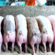 Hog Growing Agri Business for OFW's