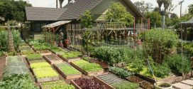 Backyard Farming to Commercial Farming is the Key